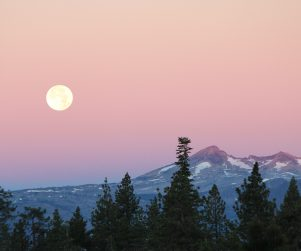 full moon pink moon by Crystal Ricotta download yours